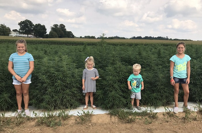 Four children standing in a row in front of hemp field